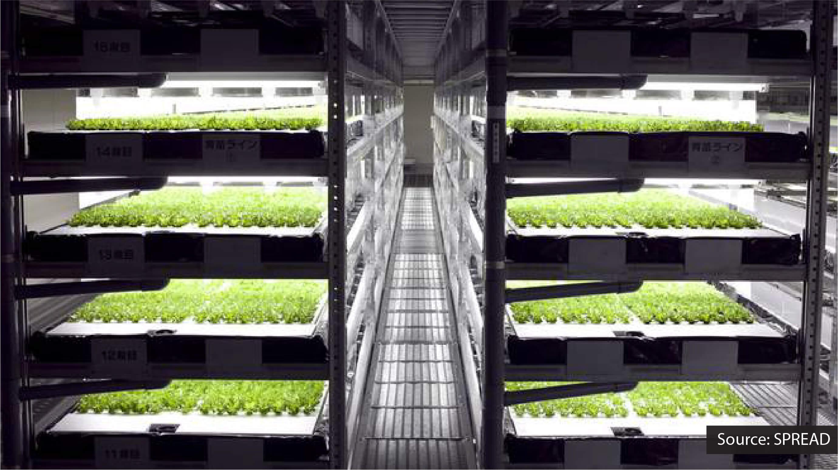 SPREAD vertical farming system.