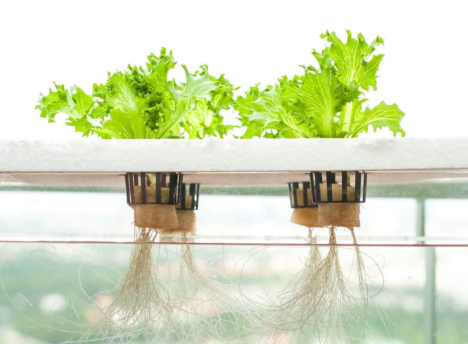 Hydroponics method of farming